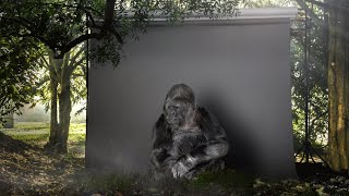 Un gorila envía un mensaje a los Humanos!