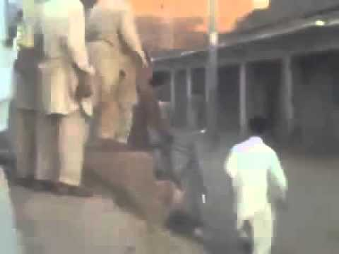 dangerous cow runs befor qurbani in peshawar 2010 SD