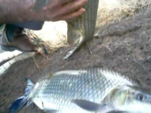 fabio pescaria com tarrafa