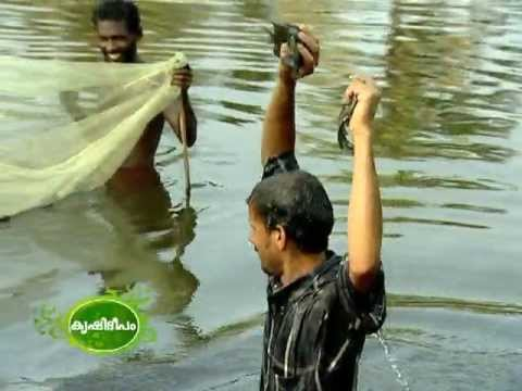 cultivation of pearl fish