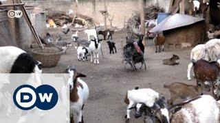 Benin's farmers break new ground | Eco-at-Africa - DEUTSCHEWELLEENGLISH