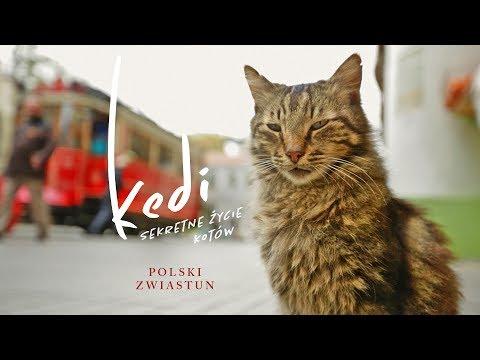 """Trailer filmu """"Kedi – sekretne życie kotów"""", który na ekrany polskich kin trafi 28 lipca"""