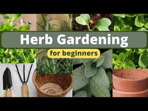 Planting an Herb Garden for Beginners