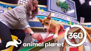 Training with Puppies Malibu and Scott | Puppy Bowl XV: Training Camp (360 Video) - ANIMALPLANETTV