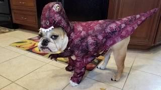 Pets get in the Halloween spirit - WASHINGTONPOST