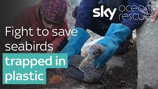 Ocean Rescue: Fight to save dozens of seabirds trapped in plastic - SKYNEWS
