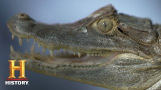 Swamp Mysteries with Troy Landry: Bonus - Jungle Joe Shows Troy a Caiman (Season 1) | History - HISTORYCHANNEL
