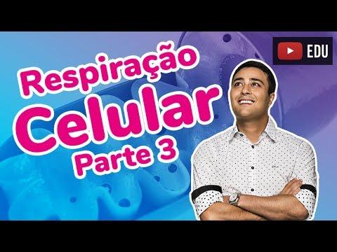 Respiração Celular - Parte 3 - Cadeia Respiratória - Prof. Paulo Jubilut