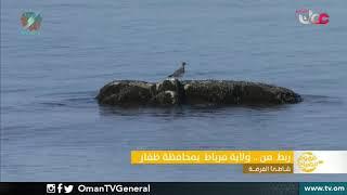 ربط مباشر من ولاية مرباط بمحافظة ظفار للحديث عن شاطئ الفرضة