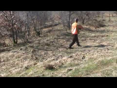 Κυνήγι Μπεκάτσας 1/Chasse à la Bécasse/HUNTING WOODCOCK/CACCIA  BECCACCIA/25-1-2011