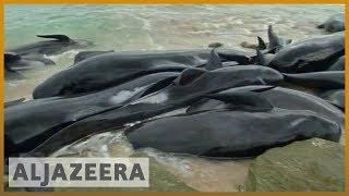 🇦🇺 Shark alert: Whales stranded in western Australia | Al Jazeera English - ALJAZEERAENGLISH