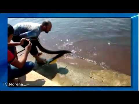 Sucuri maltratada por turistas em Albuquerque - Distrito Corumbá MS