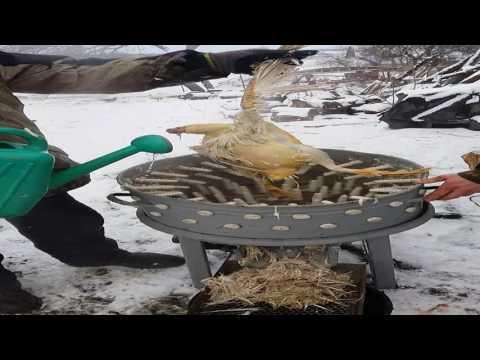Перосъемная машина для утки своими руками