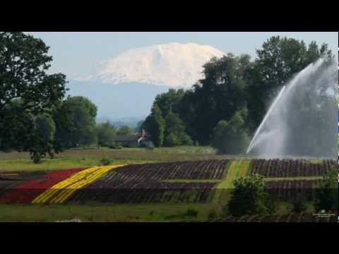 Irrigating Nurseries with Nelson Big Gun® Sprinklers on Hose Reel Travelers