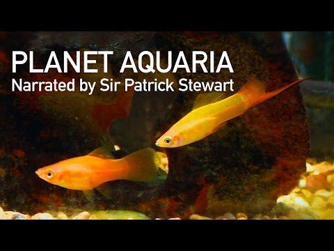 If Sir Patrick Stewart Narrated My Fish Tank