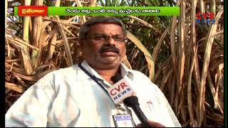 Sugarcane Farming Guide,Cultivation For Beginners | CVR News - CVRNEWSOFFICIAL