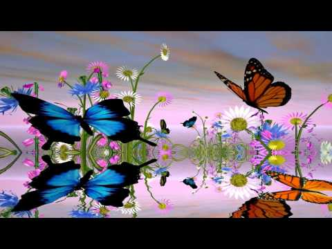 Fantastic Butterfly Screensaver