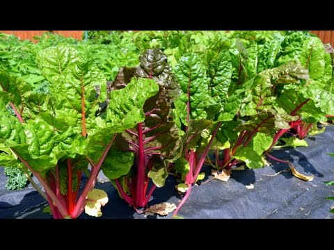 Time to start the Spring Vegetable Garden!