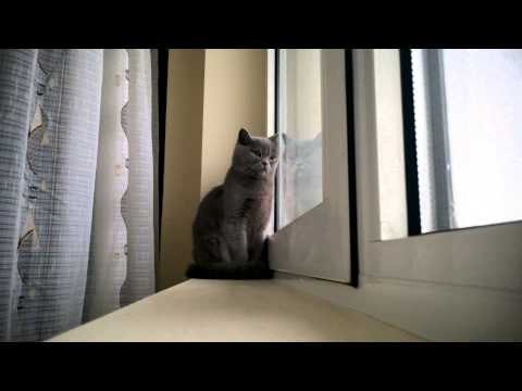 Miss Yuki: Film romanesc - scena cu pisica (Romanian movie - cat scene)
