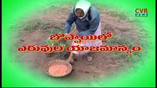 బొప్పాయి సాగు మెలుకువలు..| Papaya Cultivation Basic Practices | Raithe Raju | CVR News - CVRNEWSOFFICIAL