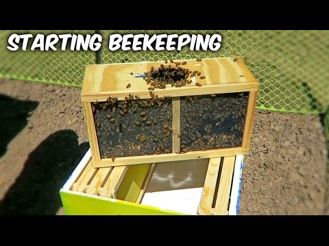 Starting Beekeeping - Vlog Week 1 Season 1