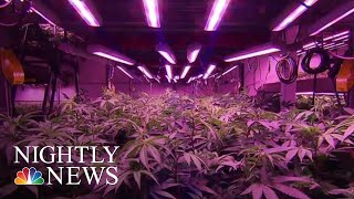 Canada Now World's Largest Legal Marijuana Marketplace | NBC Nightly News - NBCNEWS