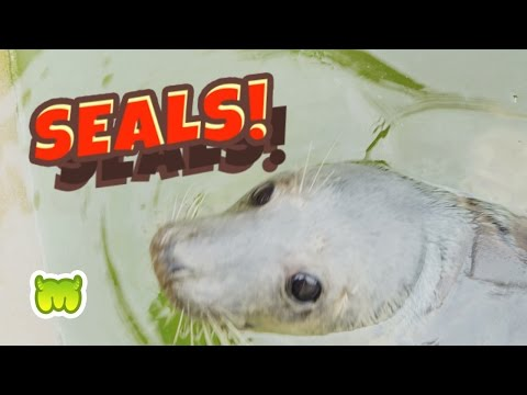 Moshi Monsters @ SEA LIFE # 3: Seals!