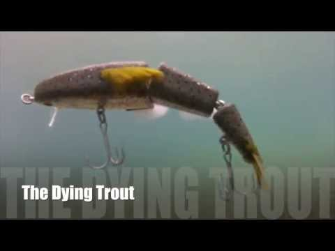 The Bettencourt Baits Dying Trout Swimbait