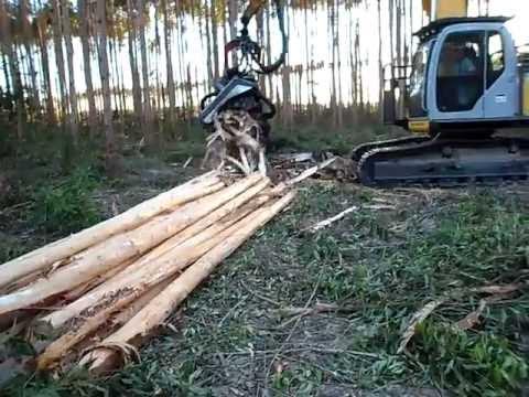 Operaçao de maquinas florestais,Harvester, Fernando, geoscava!!!