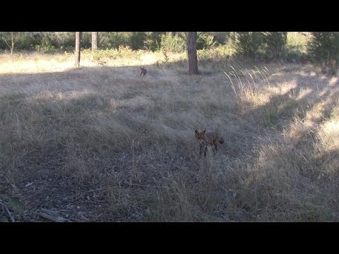 Season 2, Webisode 13 - Epic Hunting Trip to Australia - Part 4