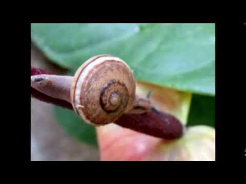 snail in shell