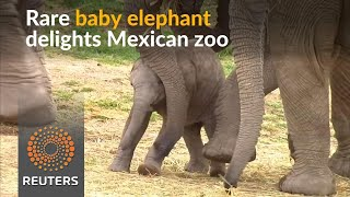 Rare baby elephant brings joy to Mexican zoo - REUTERSVIDEO