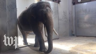 Meet Spike: The National Zoo's new elephant - WASHINGTONPOST