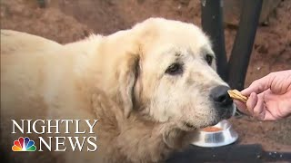 Dog Refuses To Abandon His Home, Even After It Burned In Paradise, CA Fire | NBC Nightly News - NBCNEWS