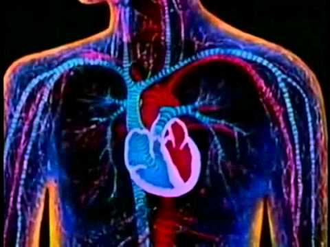 Circulatory System   Bill Nye on the Heart (Part 1)