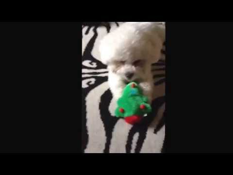 Lol a weird video of my dog xx
