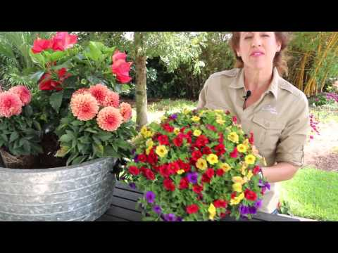 How to Design a Container Garden