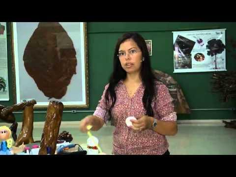 Amazônia Agora l Aprenda como fazer uma boneca fofucha l Parte 2