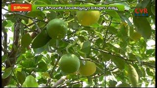 నిమ్మ సాగులో గజ్జి తెగుళ్లు నివారణ | Lemon Cultivation Success Story in Nellore Dist | Raithe Raju - CVRNEWSOFFICIAL
