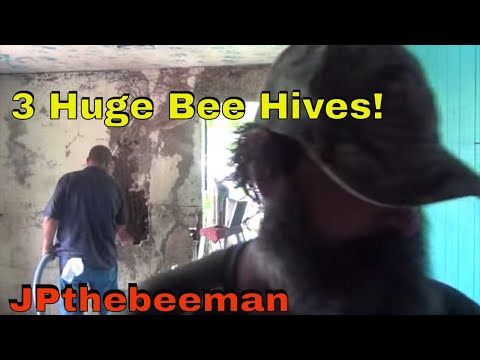 JPthebeeman & Schawee Remove 3 Huge Honey Bee Colonies!