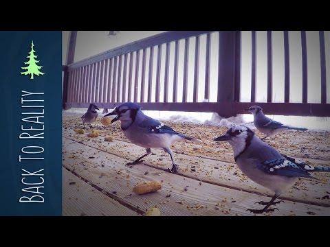 Reality Break: 50 Peanuts for 50 Blue Jays