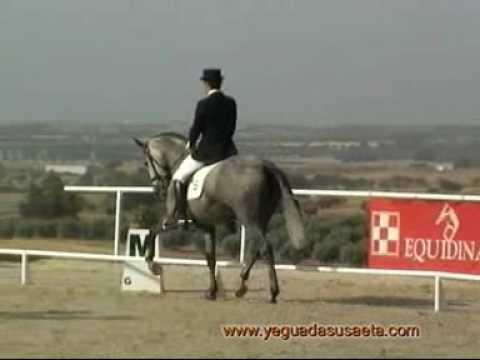 yegua pre, videos de caballos, yeguas