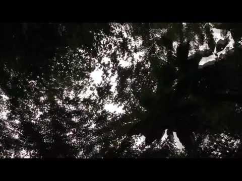 Benzedeiras de Macuco | Patrimônio Imaterial, Macuco