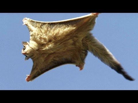Uçabilen 10 İlginç Hayvan