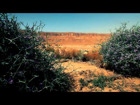 Stock Footage of flowered shrubs in the desert in Israel.