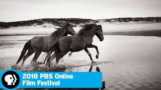 Stronghold of Resistance: Sable Island and Her Legendary Horses | 2018 Online Film Festival | PBS - PBS