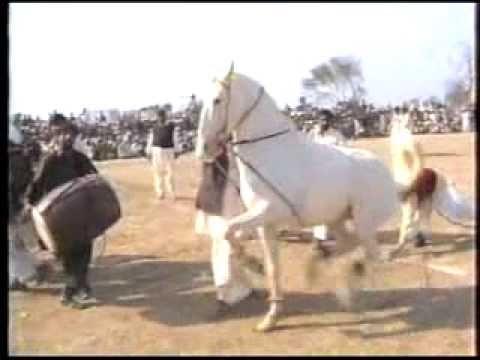 Horse Dance (2): Fare Hasil Wala ( Haji Syed Ghulam Akbar Gillani)