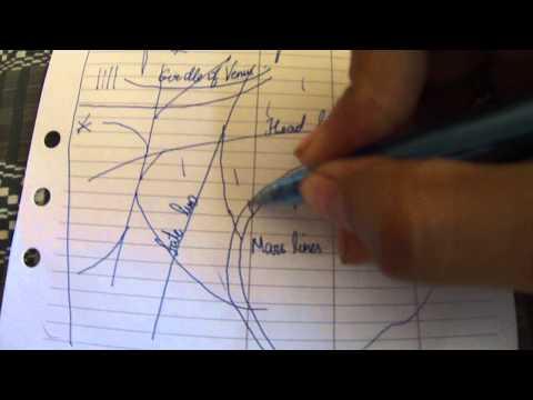 girdle of venus/ mars lines/ sun lines more points palmistry