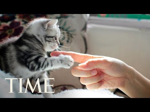 Cats Care About People More Than Food, New Study Finds | TIME