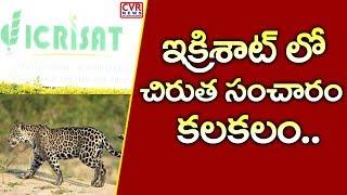 ఇక్రిశాట్ లో చిరుత సంచారం కలకలం..| Leopard Tiger Wandering in ICRISAT | Patancheru | CVR News - CVRNEWSOFFICIAL